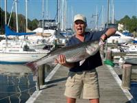 chesapeake bay fishing report striped bass